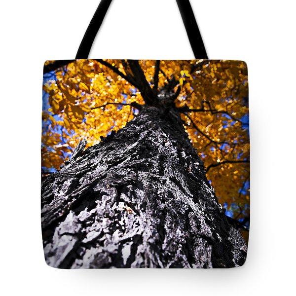 Big Autumn Tree In Fall Park Tote Bag by Elena Elisseeva