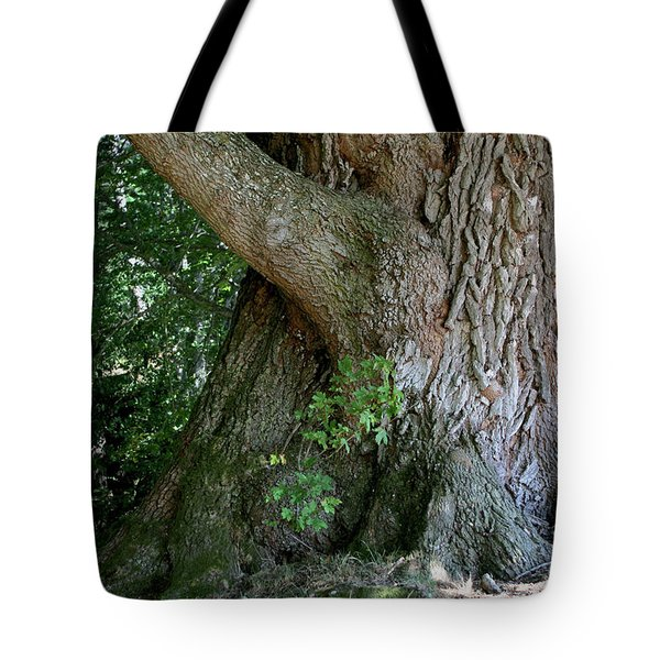 Tote Bag featuring the photograph Big Fat Tree Trunk by Lorraine Devon Wilke