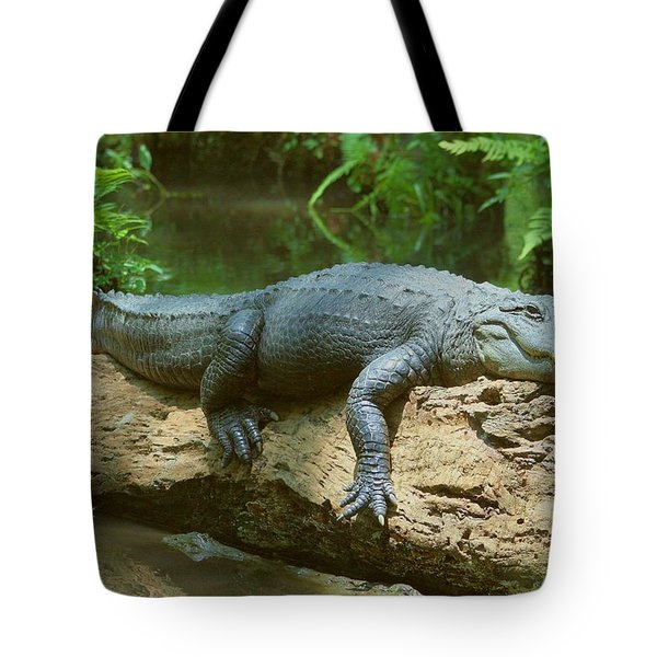 Tote Bag featuring the photograph Big Gator On A Log by Myrna Bradshaw
