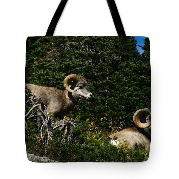 Big Horn Sheep Glacier National Park Tote Bag