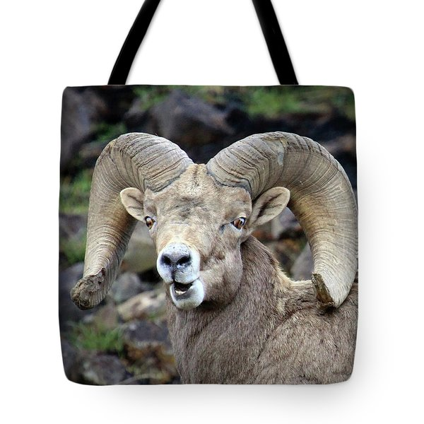Tote Bag featuring the photograph Bighorn Giant by Steve McKinzie