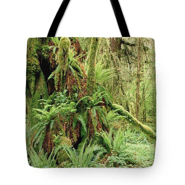 Bigleaf Maple Acer Macrophyllum Trees Tote Bag by Gerry Ellis