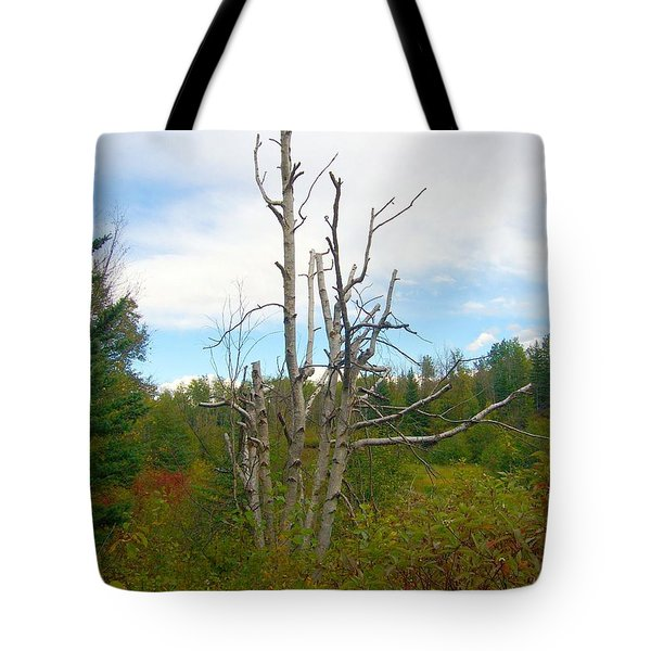Tote Bag featuring the photograph Birch Tree by Jim Sauchyn