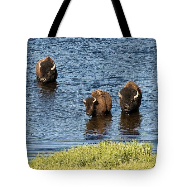 Bison Enjoying The Water Tote Bag by Paul Cannon