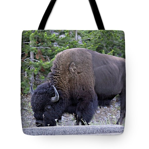 Bison Grazing Tote Bag