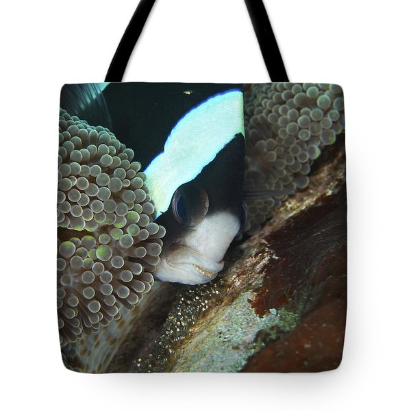 Black And White Anemone Fish Looking Tote Bag by Mathieu Meur