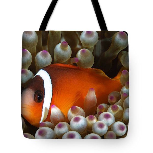 Black Anemonefish, Fiji Tote Bag