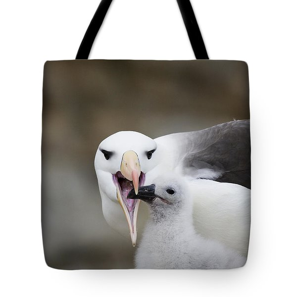 Black Browed Albatross Preparing Tote Bag by Suzi Eszterhas