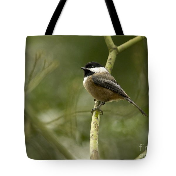 Black-capped Chickadee With Branch Bokeh Tote Bag by Sharon Talson
