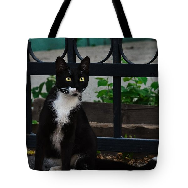 Black Cat On Black Background Tote Bag