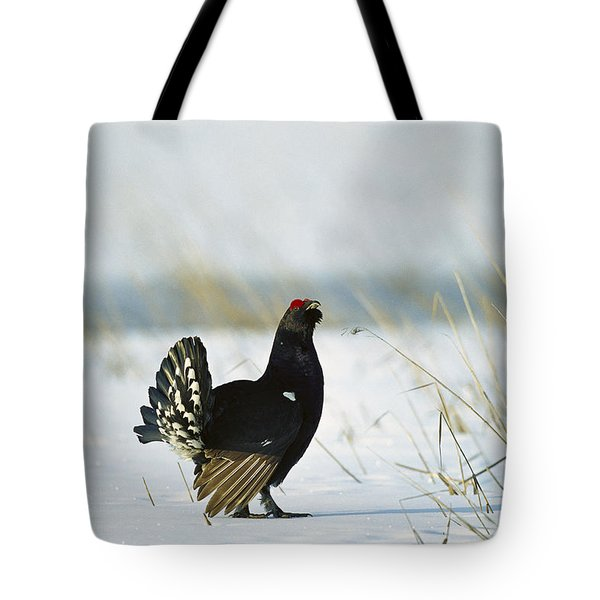 Black Grouse Tetrao Tetrix Tote Bag by Konrad Wothe