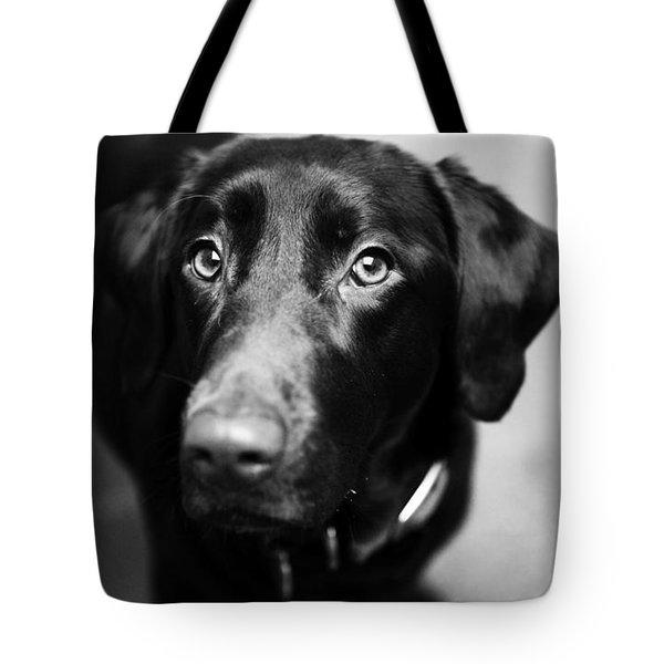 Black Labrador  Tote Bag by Sumit Mehndiratta
