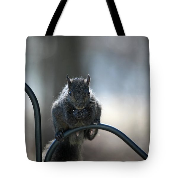 Black Squirrel  Tote Bag by Karol Livote