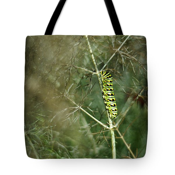 Black Swallowtail Butterfly Larva In Bronze Fennel Tote Bag