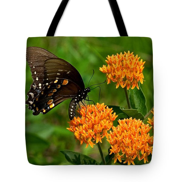 Black Swallowtail Visiting Butterfly Weed Din012 Tote Bag