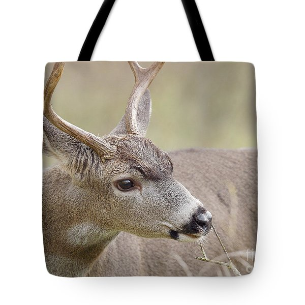 Tote Bag featuring the photograph Black-tailed Deer by Doug Herr
