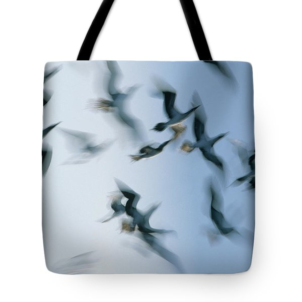 Blue-footed Booby Sula Nebouxii Flock Tote Bag by Winfried Wisniewski