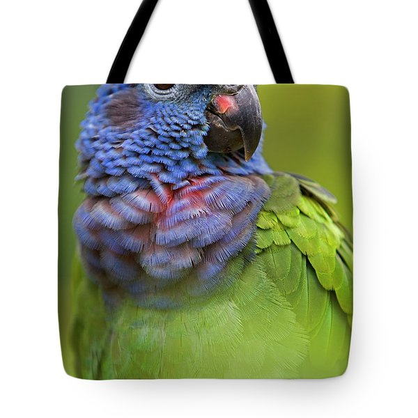 Blue-headed Parrot Pionus Menstruus Tote Bag by Ingo Arndt