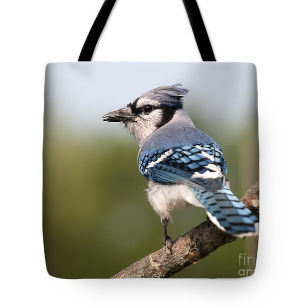 Blue Jay Tote Bag by Art Whitton