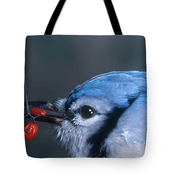 Blue Jay Tote Bag by Photo Researchers, Inc.