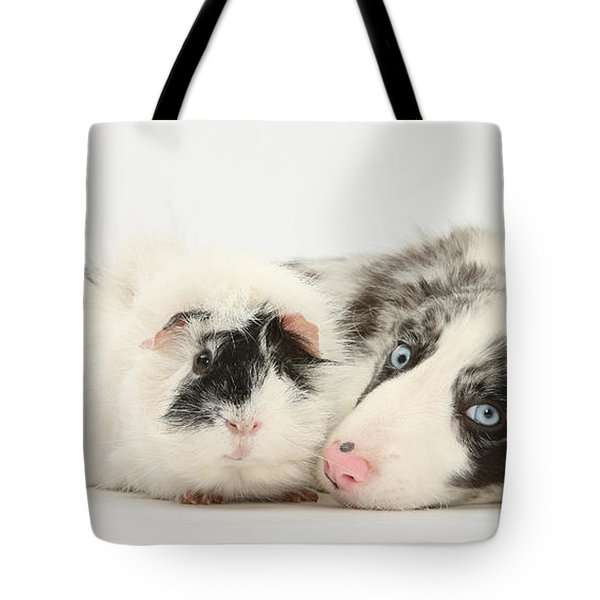 Blue Merle Border Collie With Guinea Pig Tote Bag by Mark Taylor