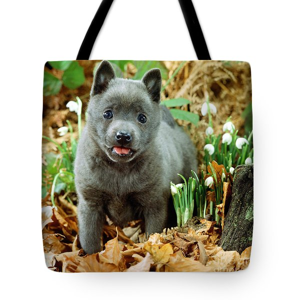 Blue Shipperke Tote Bag by Jane Burton