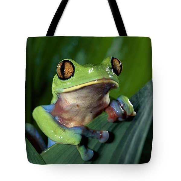 Blue-sided Leaf Frog Agalychnis Annae Tote Bag by Michael & Patricia Fogden
