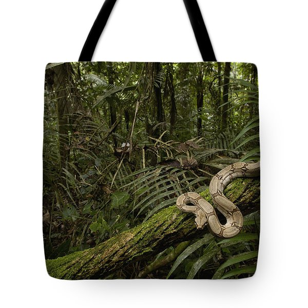 Boa Constrictor Boa Constrictor Coiled Tote Bag by Pete Oxford