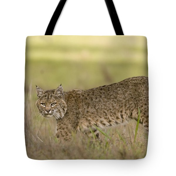 Bobcat Female Walking Santa Cruz Tote Bag by Sebastian Kennerknecht