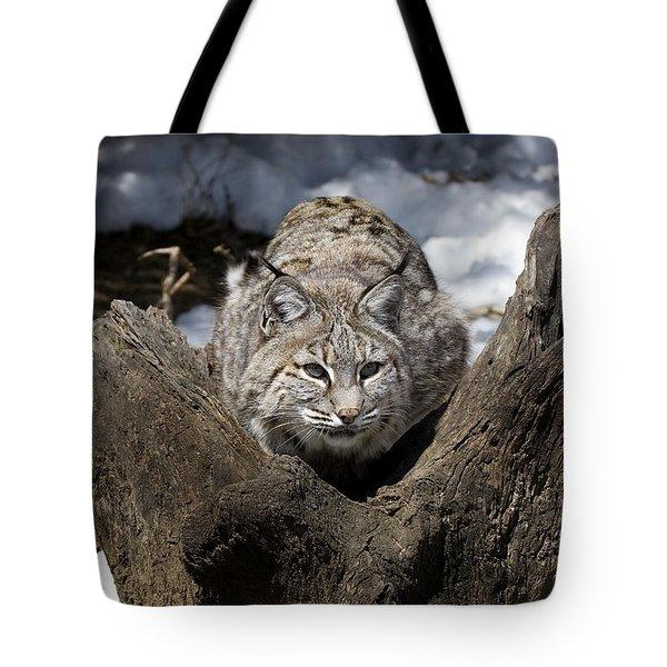 Bobcat  Tote Bag by Jeff Grabert
