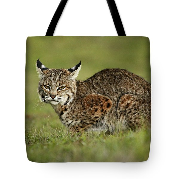 Bobcat Juvenile Santa Cruz California Tote Bag by Sebastian Kennerknecht