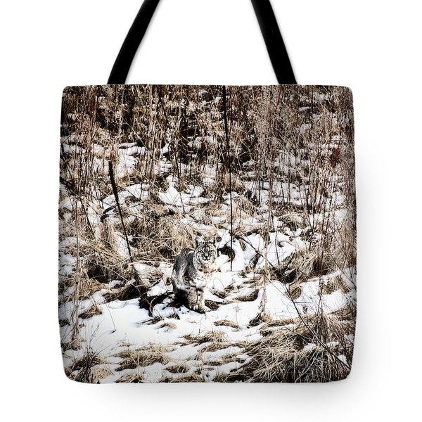 Tote Bag featuring the photograph Bobcat Winter by Britt Runyon