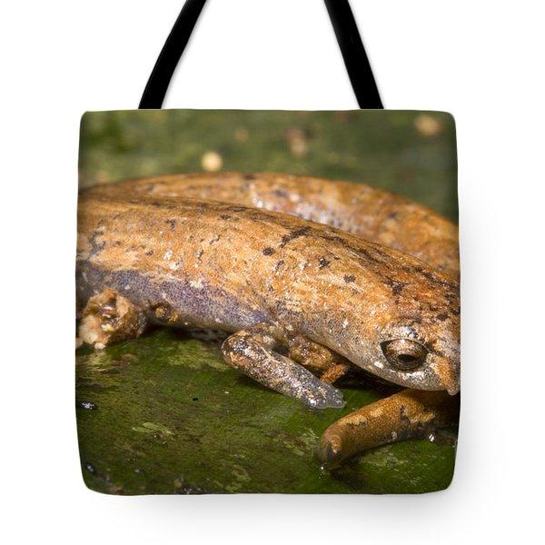 Bolitoglossine Salamander Tote Bag by Dante Fenolio