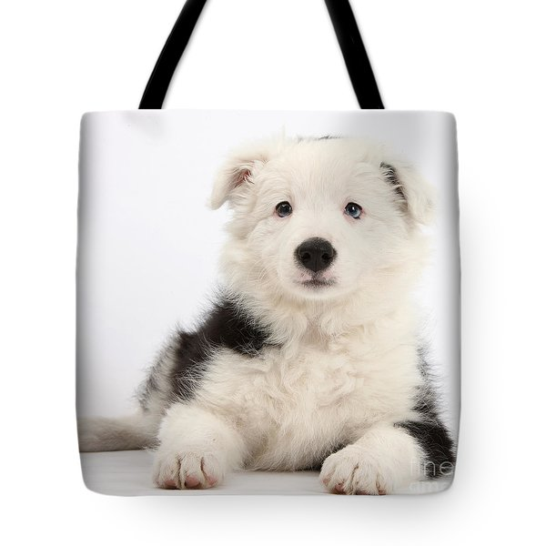 Border Collie Female Puppy Tote Bag by Mark Taylor
