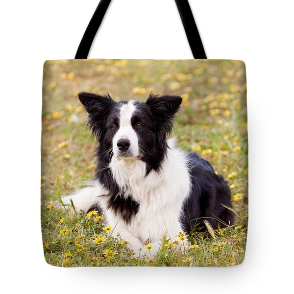 Border Collie In Field Of Yellow Flowers Tote Bag