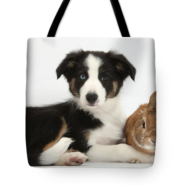 Border Collie Pup And Netherland-cross Tote Bag by Mark Taylor