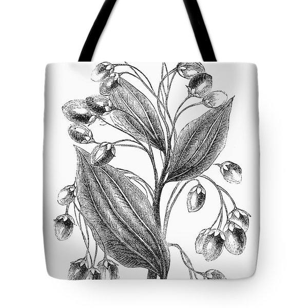 Botany: Cinnamon Plant Tote Bag by Granger