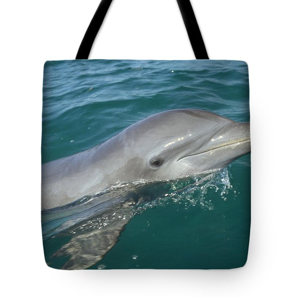 Bottlenose Dolphin Tursiops Truncatus Tote Bag by Konrad Wothe