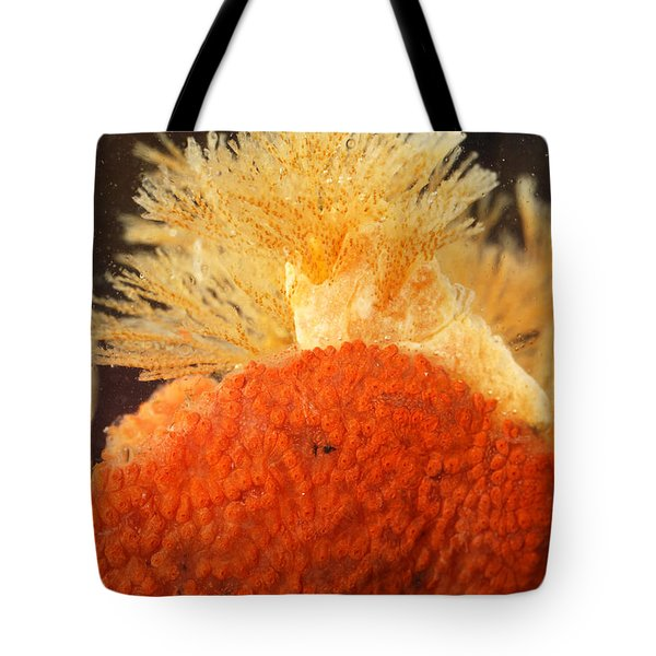 Bowerbanks Halichondria & Spiral-tufted Tote Bag by Ted Kinsman