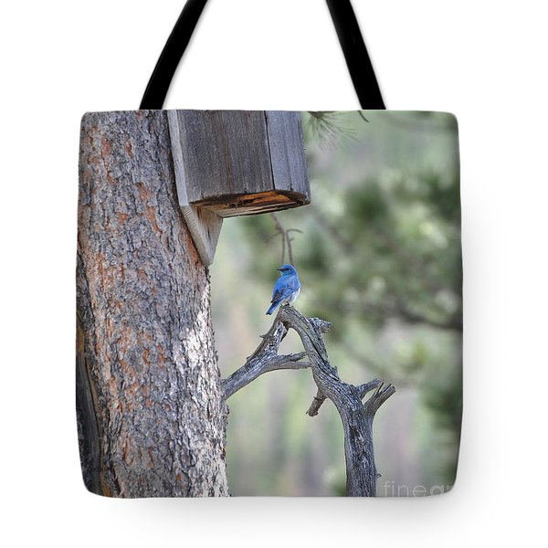 Boy Blue Tote Bag