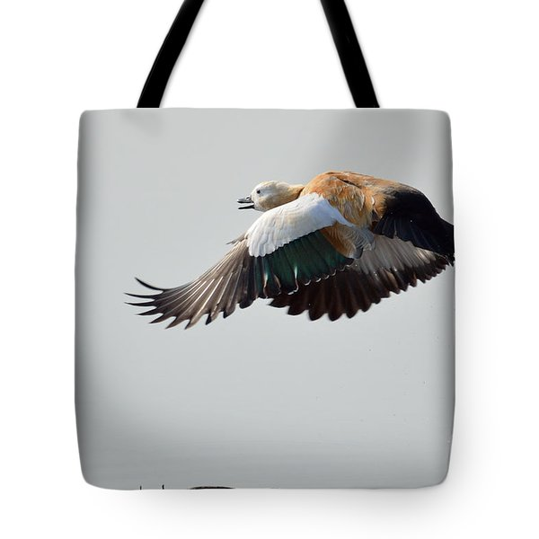 Brahminy Shelduck Tote Bag by Fotosas Photography