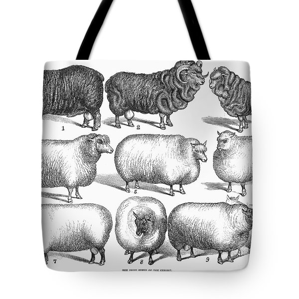 Breeds Of Sheep, 1876 Tote Bag by Granger