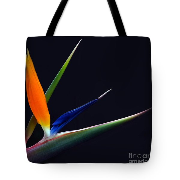 Bright Bird Of Paradise Square Frame Tote Bag