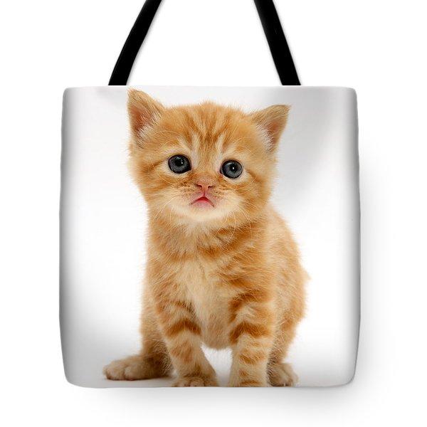 British Shorthair Red Tabby Kitten Tote Bag by Jane Burton