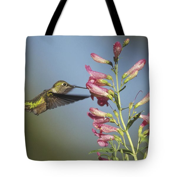Broad Tailed Hummingbird Juvenile Tote Bag