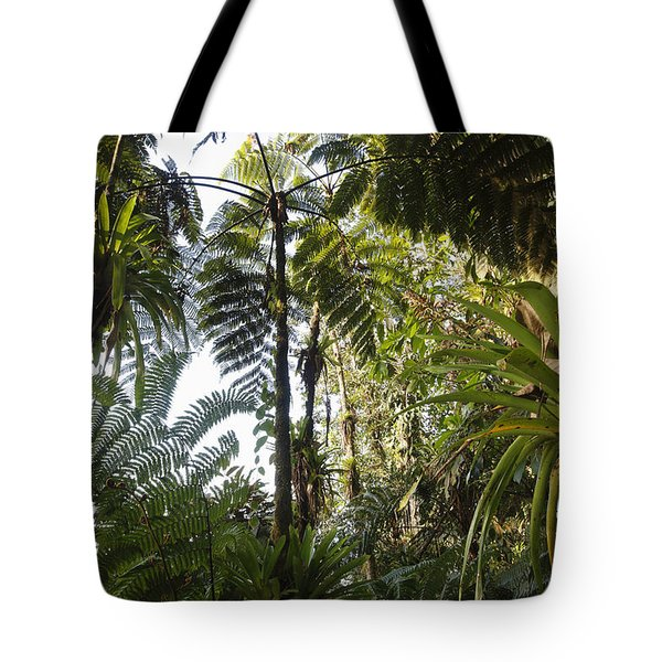 Bromeliad And Tree Ferns  Tote Bag by Cyril Ruoso