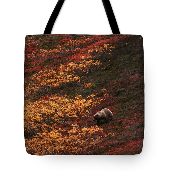 Brown Bear Denali National Park Tote Bag