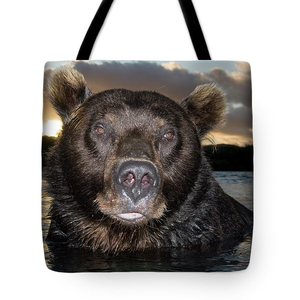 Brown Bear Ursus Arctos In River Tote Bag by Sergey Gorshkov