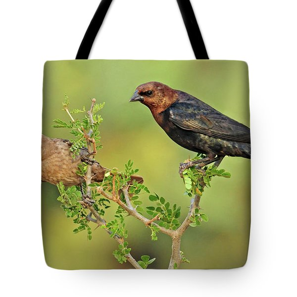 Brown Headed Cowbird Pair Tote Bag