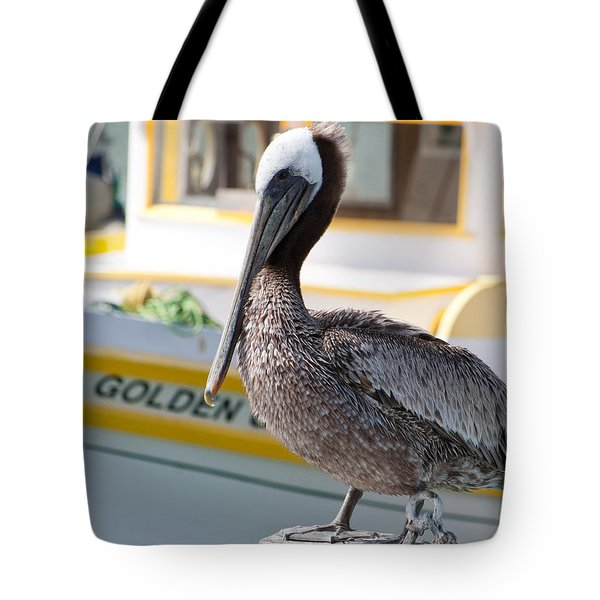 Tote Bag featuring the photograph Brown Pelican by Randy Bayne